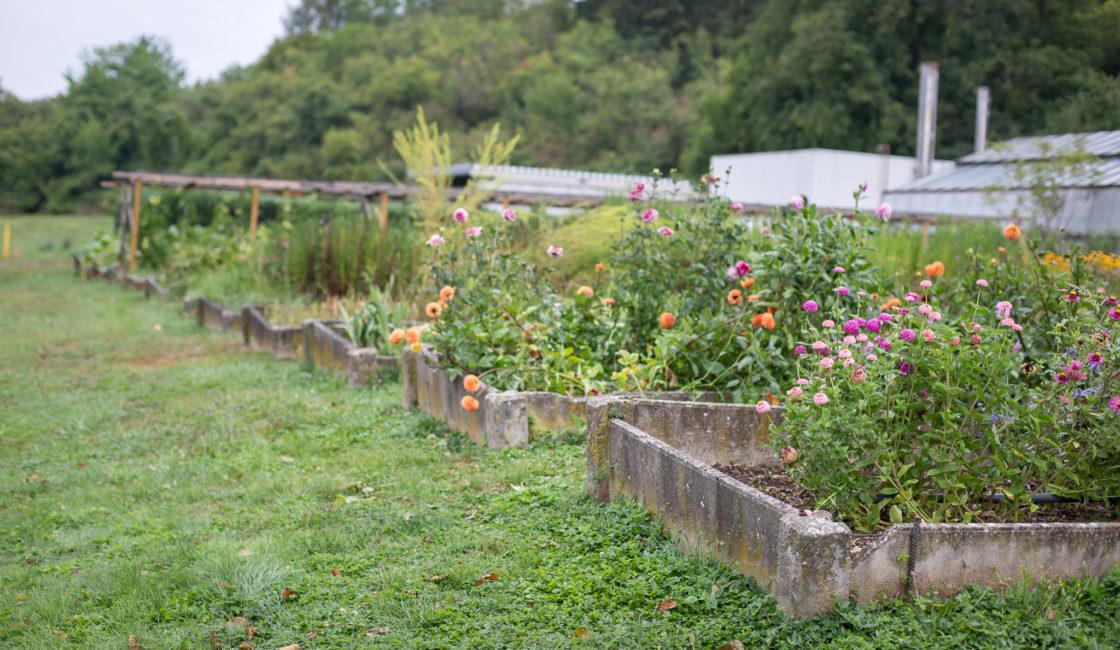 Arbeitstherapie in der Gärtnerei