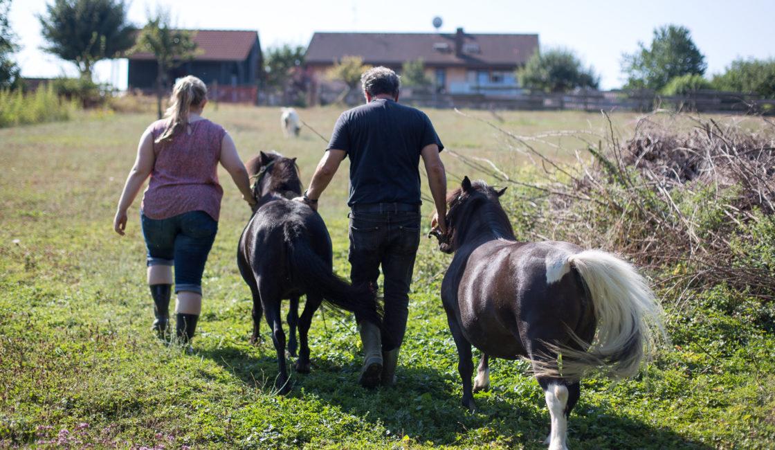 Ponys und Kleintiere
